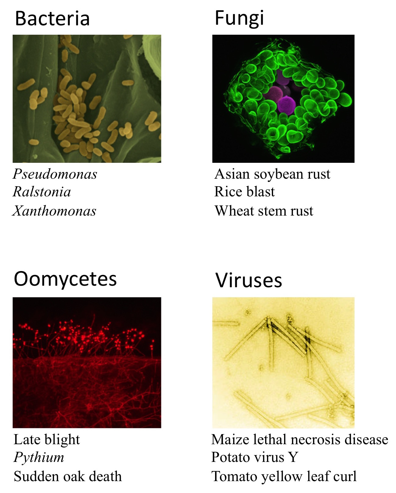 pathogens composite final